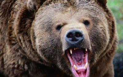Охота на медведя в Карелии